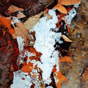 2016_autumn ice on leaves